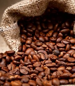 chino Cyprus finest Coffee Beans